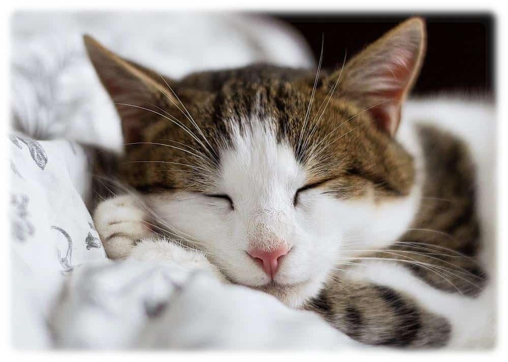 Haben Sie manchmal Schlafstörungen?